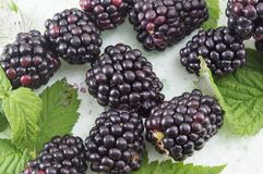 Fresh blackberries on blackberry leaf Stock Photos