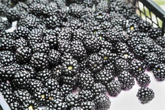 Fresh blackberries Stock Images