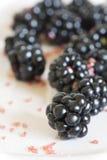 Fresh blackberries in dish Stock Images