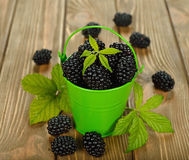 Fresh blackberries Royalty Free Stock Images