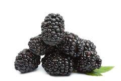 Fresh blackberries isolated Stock Images