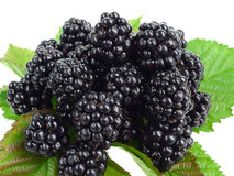Fresh blackberries isolated Royalty Free Stock Images
