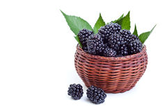 Fresh blackberries in a small basket Royalty Free Stock Image