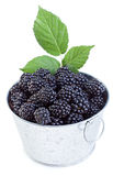 Fresh blackberries in small bucket Royalty Free Stock Photos