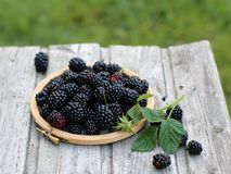 Fresh blackberries in a small embroidery hoop royalty free stock photo