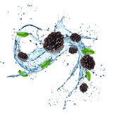Fresh blackberries with water splash Royalty Free Stock Image