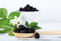 Fresh Blackberries. In wooden spoon with blackberry leaves, flowers, and colander filled with berries blurred in background royalty free stock images