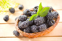 Fresh blackberry Royalty Free Stock Photography