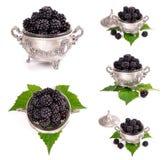 Fresh blackberry Stock Photo