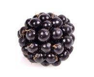 Fresh blackberry Royalty Free Stock Images