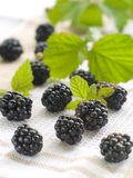 Fresh blackberry Stock Photography