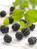 Fresh blackberry Stock Photography