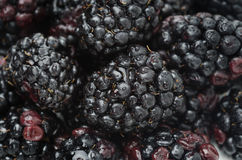 Fresh blackberry background, horizontal, selective focus Royalty Free Stock Photography