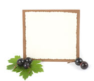 Fresh blackberry with banner stock photography