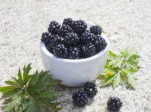 Fresh blackberry royalty free stock images