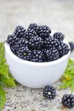 Fresh blackberry royalty free stock image