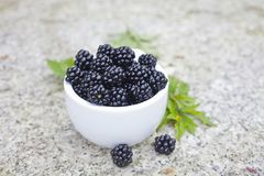 Fresh blackberry royalty free stock photos