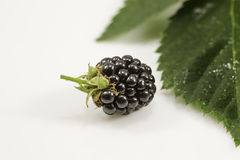 Fresh blackberry with green leaf on white background. Fresh  blackberry close-up with green leaf on white background Royalty Free Stock Image