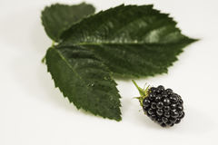 Fresh blackberry with green leaf on white background. Fresh  blackberry close-up with green leaf on white background Stock Photography