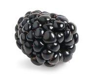 Fresh blackberry isolated. Single fresh blackberry on white background stock photos