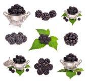 Fresh blackberry Stock Photos