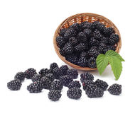 Fresh blackberry with leaf in basket Royalty Free Stock Image