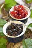 Fresh blackberry and red currant Royalty Free Stock Images