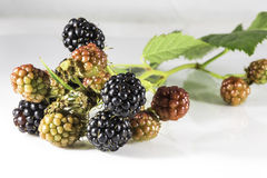 Fresh blackberry's with green leaf on white background. Fresh  blackberry's close-up with green leaf on white background Royalty Free Stock Photos