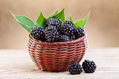 Fresh blackberry in small fruit basket Royalty Free Stock Image