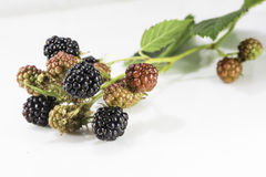 Fresh blackberrys with green leaf on white background. Fresh black and red blackberrys with green leaf on white background Stock Images