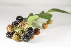 Fresh blackberrys with green leaf on white background. Fresh black and red blackberrys with green leaf on white background Stock Photos