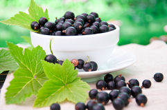 Fresh blackcurrant Stock Image