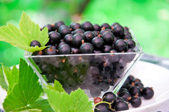 Fresh blackcurrant Stock Photography