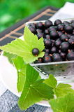 Fresh blackcurrant Stock Photos