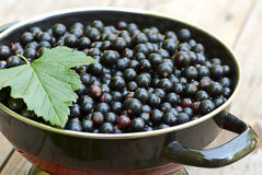 Fresh blackcurrant in bowl Stock Images
