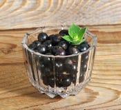 Fresh blackcurrant glass bowl Royalty Free Stock Image