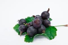 Fresh blackcurrant on leaf Stock Images