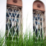 Fresh blades of grass with large building windows Stock Photos