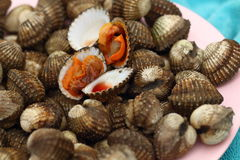 Fresh Blood Cockles market edible background Royalty Free Stock Photography