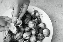 Fresh Blood Cockles market edible. Background Royalty Free Stock Image