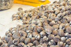 Fresh blood cockles in sea food market Stock Images