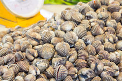 Fresh blood cockles in sea food market Royalty Free Stock Photos