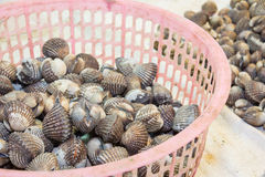 Fresh blood cockles in sea food market Royalty Free Stock Images