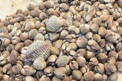 Fresh blood cockles in sea food market Stock Photos