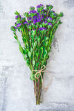 Purple asters. Fresh blooming garden purple asters bouquet Stock Images