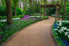 Fresh blooming spring flowers in the forest, Keukenhof park, Netherlands Royalty Free Stock Images