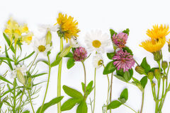 Fresh blooming wildflowers. Chamomile, dandelion, clover, snapdragons on white background stock photo