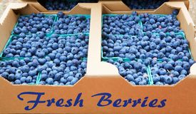 Fresh Blue berries Stock Photography