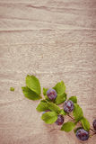 Fresh Blue Berry Branch Isolated Vintage Cloth Stock Photo