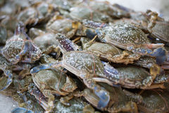 Fresh blue crab customer choose raw material. In fresh market Royalty Free Stock Photo